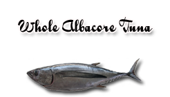 whole fresh albacore tuna