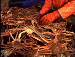 wholesale-snowcrab